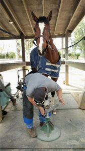 Horse Hoof Filing