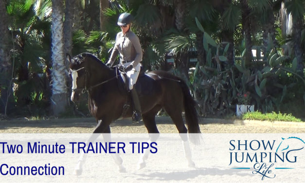 Equestrian Training Scale: Connection – Video